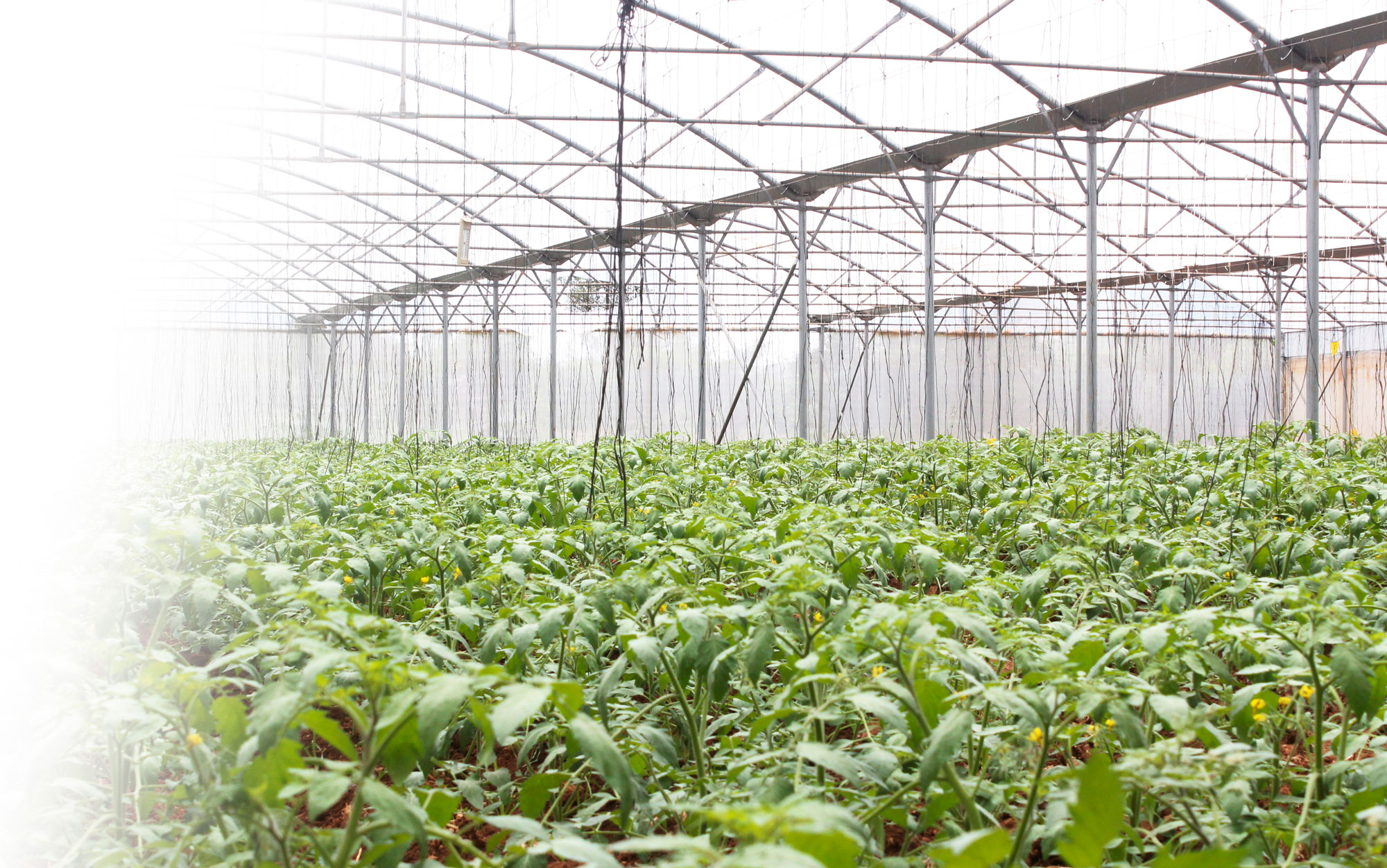 برنامج كفالات الزراعة